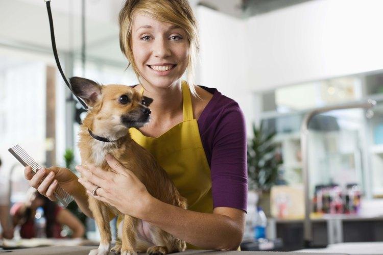 Lleva regularmente a tu pug con un estilista para perros.