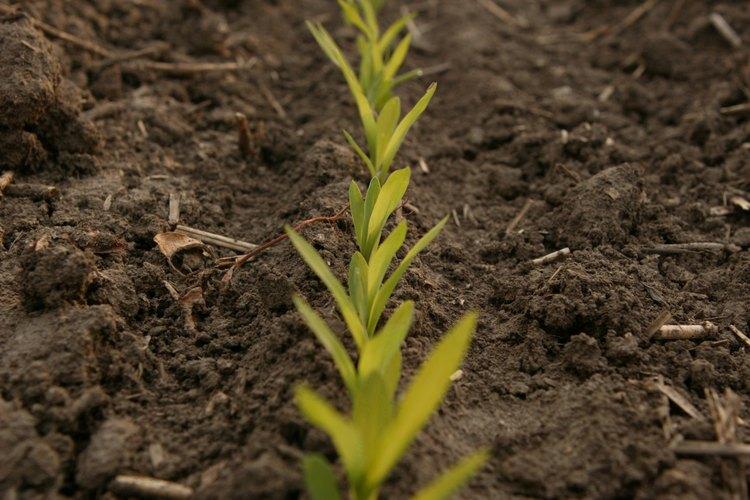 Los fertilizantes ofrecen nutrientes al suelo para ayudar a que las plantas crezcan.