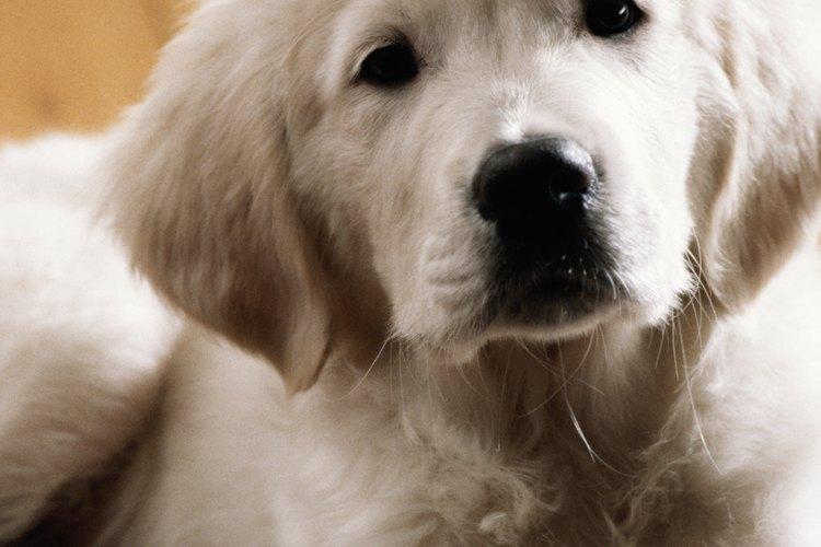 Elimina el olor de orina de tu perro en la madera.