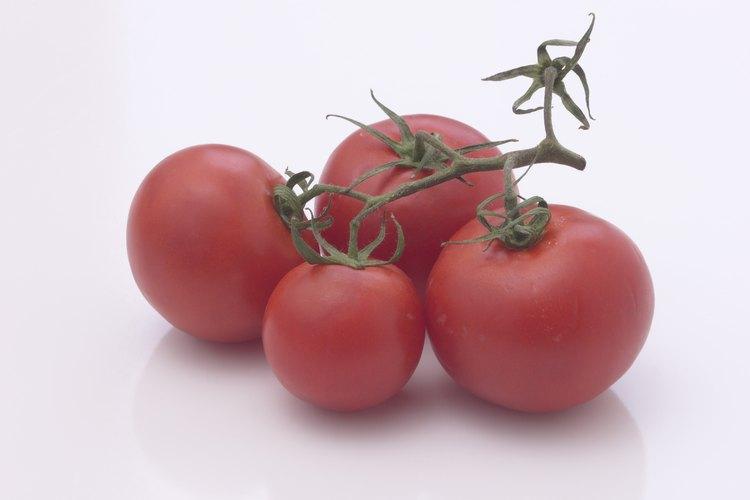 El uso efectivo de fertilizantes puede ayudar a incrementar el rendimiento de las plantas de tomate.