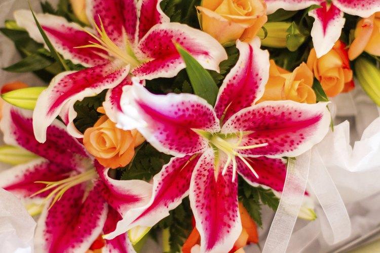 Los lilium son caracterizados por un fuerte aroma.