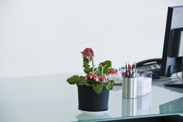 Trasplanta las plantas para que las raíces crezcan adecuadamente.
