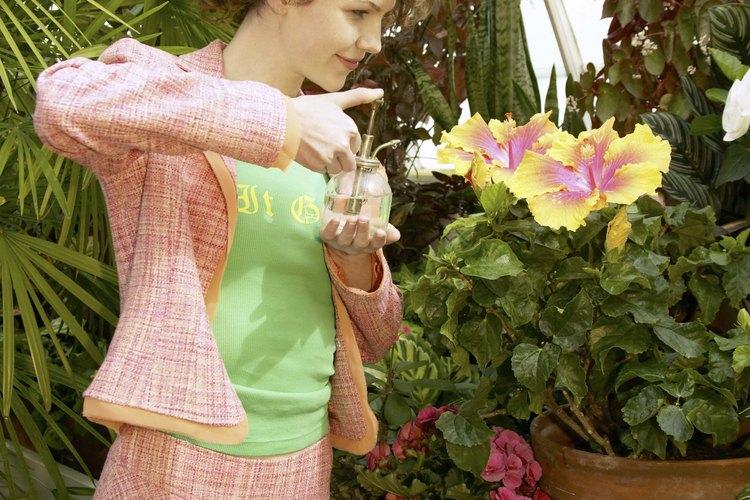 Regar una planta muriendo con agua azucarada no necesariamente la salvará.