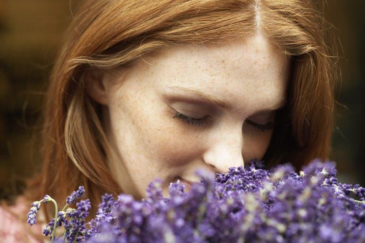 Las lujosas flores son una de las alegrías de cultivar lavanda.