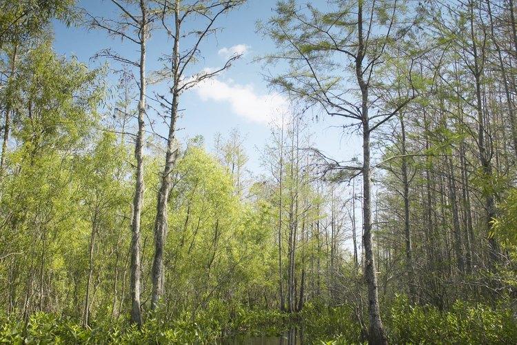 Los Everglades se encuentran dentro de los muchos destinos silvestres para acampar primitivamente.
