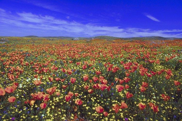Fotografía de paisaje con flores y un cielo azul brillante.