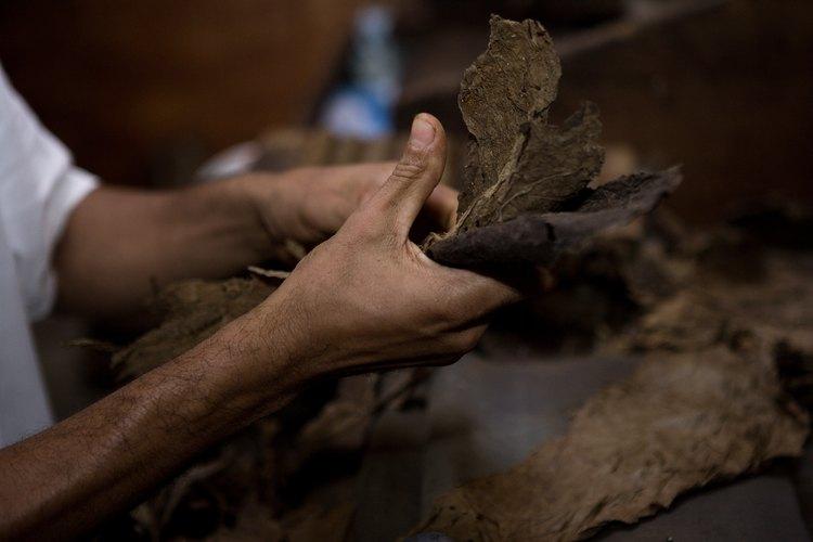 Despues del periodo de secado el tabaco debe ser cortado en diferentes tamaños para ser utilizado en diferentes productos.