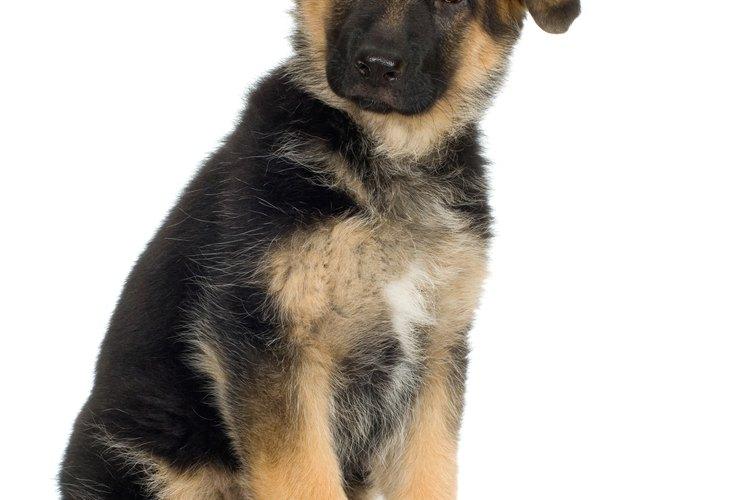Fuerza al perro para que se siente entre tus piernas y permanece arrodillado detrás suyo.