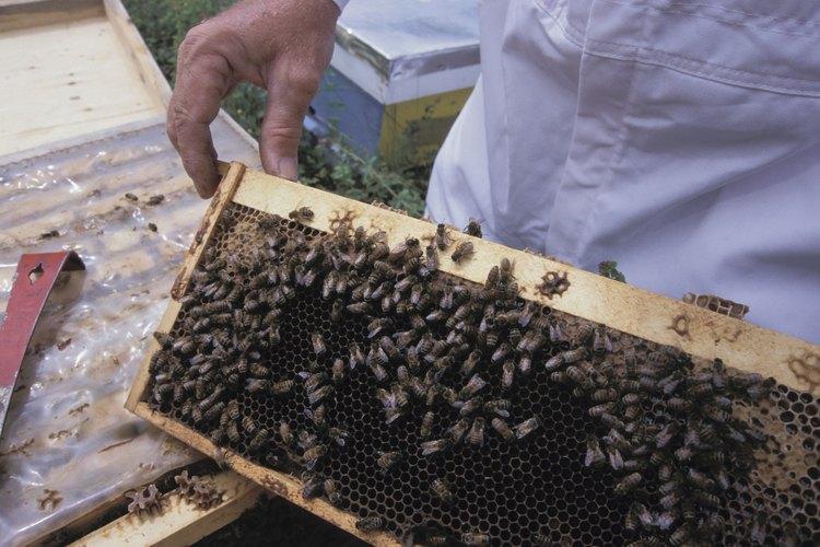 No necesitas una gran cantidad de propiedad para ser un apicultor exitoso.