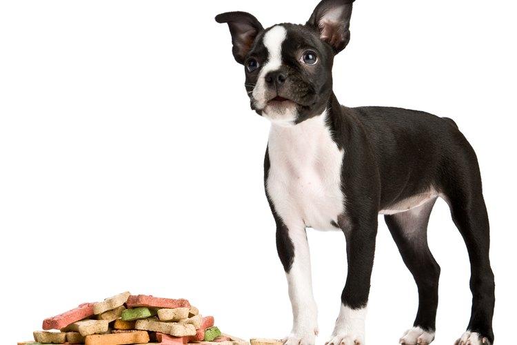 Un cachorro comiendo.