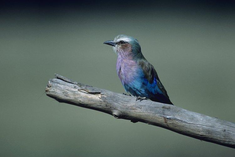 Hay más de 10.000 especies de aves en el mundo, de acuerdo con Birding.com