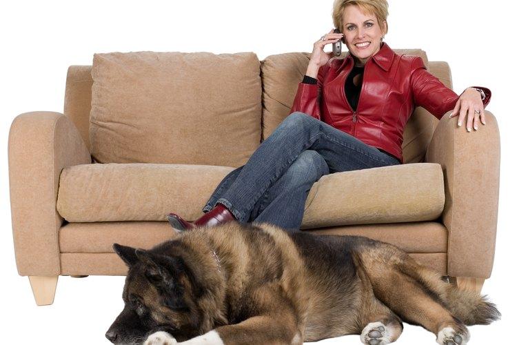 Mantén tus muebles de cuero libres de moho, haciendo que la superficie esté limia y seca.