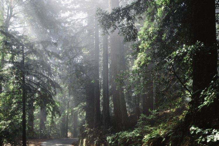 Las plantas perennes representan la gran mayoría de la vida vegetal en bosques y tundras.