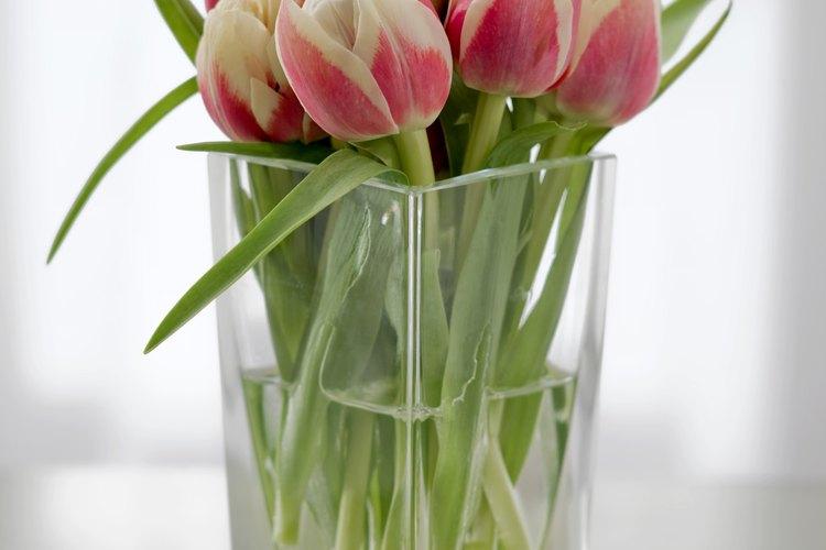 Los tulipanes crecen en una variedad de colores.