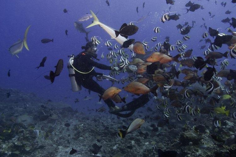 El arrecife del Caribe es el más antiguo del planeta.