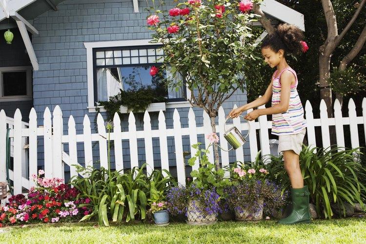 El compost te ayuda a brindarle los nutirentes necesarios a las plantas y al suelo.