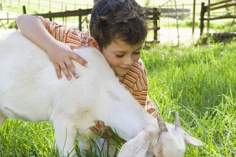 Las mascotas y animales de granja son buenos temas para proyectos de ciencia.