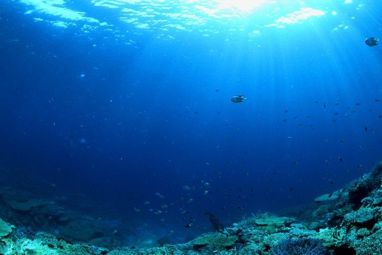 En los ecosistemas acuáticos, el sol juega un papel importante porque permite el proceso de fotosíntesis.