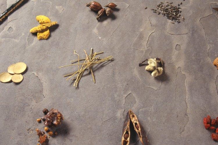 Hay cerca de 700 variedades diferentes de hierbas y plantas que son venenosas para los gatos.
