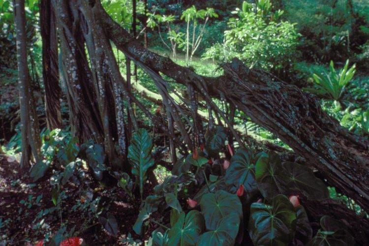 Explora la jungla y el bosque lluvioso en un vehículo apropiado.