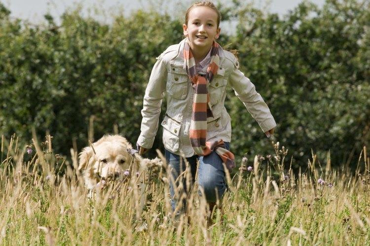 Determina por qué tu cachorro de labrador está actuando agresivamente.