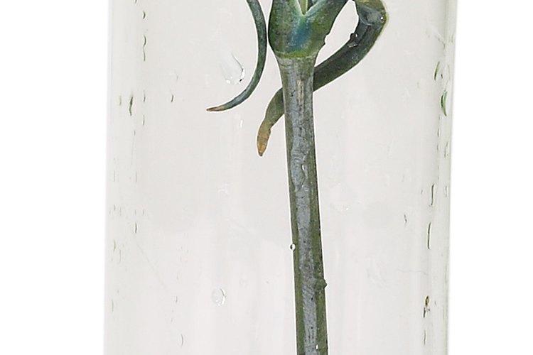 Otros claveles diseñados son el clavel azul, también conocido como polvo de luna.