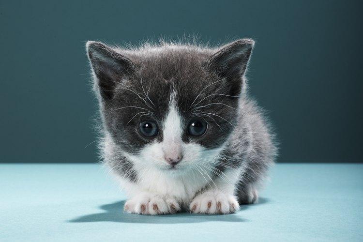 A veces los gatos y gatitos tienen ojos llorosos.