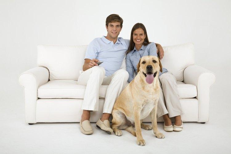 Mantén tu casa limpia cuando tu perra tenga su periodo usando pañales reutilizables.