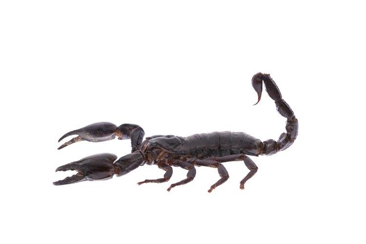 Aprende lo que hace a una personalidad de Escorpio ser como es.