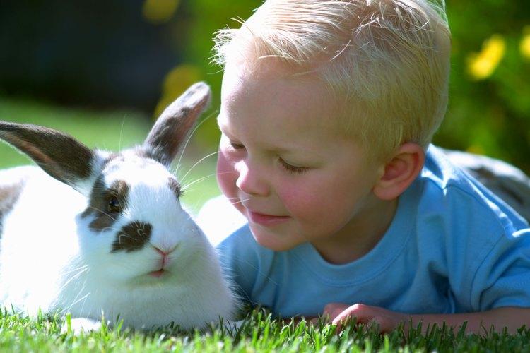 Un conejo puede ser una mascota adorada por tu familia.
