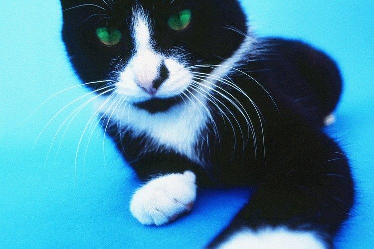 Un gato acariciando tu cara puede ser una muestra de cariño.