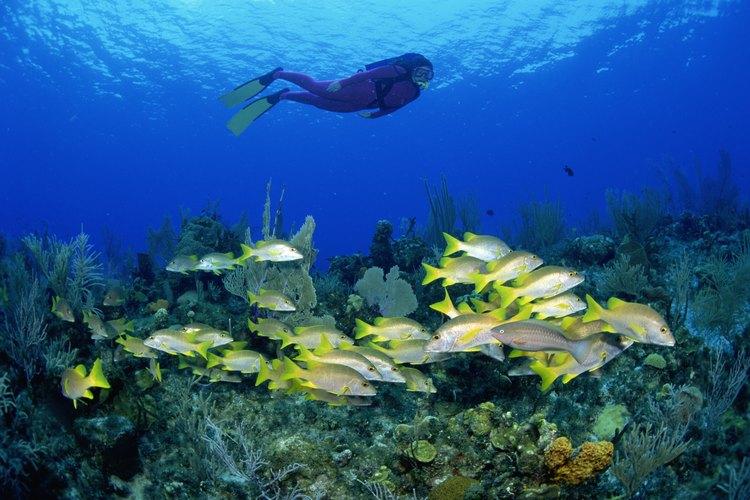 Los biólogos marinos estudian la vida marina en los océanos y laboratorios.