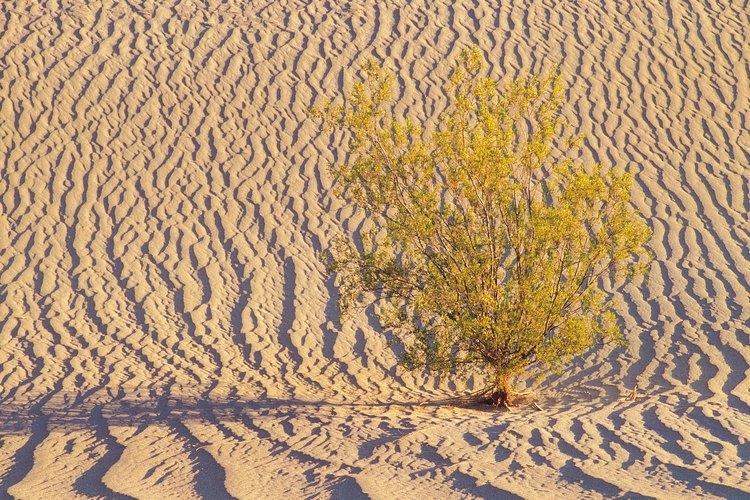 El Valle de la Muerte tiene una extraña belleza.