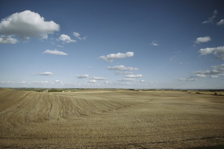 La pradera es un hermoso espacio abierto.