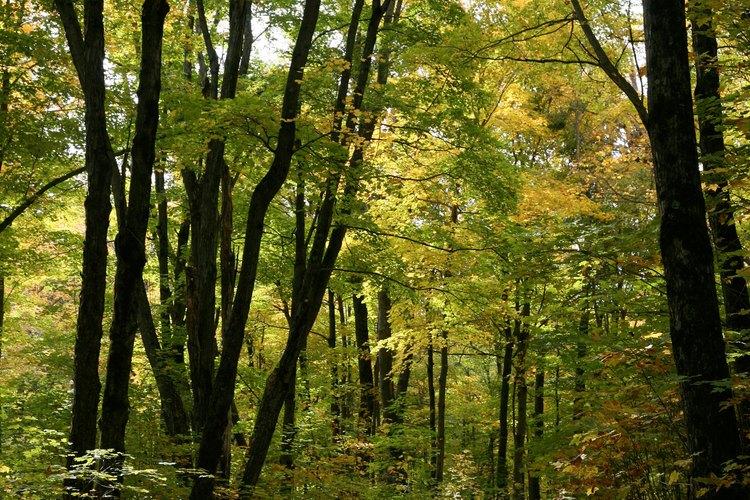 Un factor natural, el bosque, se conecta con un factor humano, el camino.