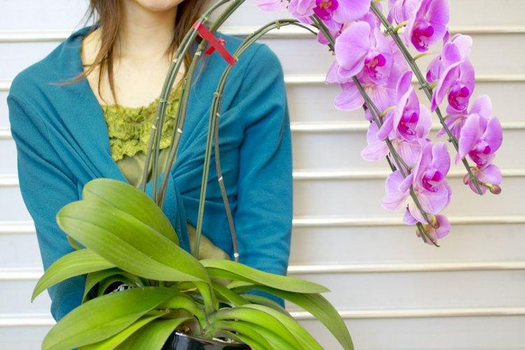 Una mujer y su orquídea, no tiene precio.