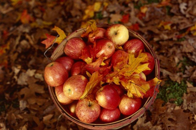 La manzana era una parte regular de la dieta medieval.