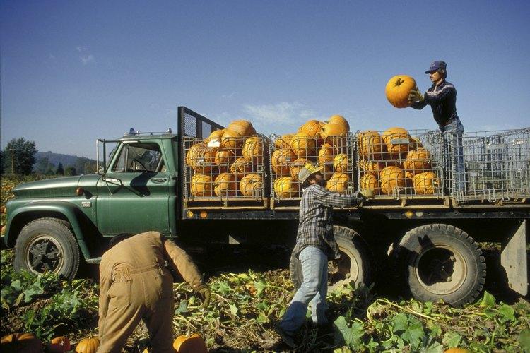 Trabajar tu tierra siempre implicará trabajo pero también ventajas.