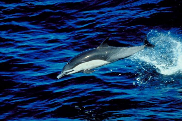 En esta playa es posible el avistamiento de delfines y ballenas jorobadas.
