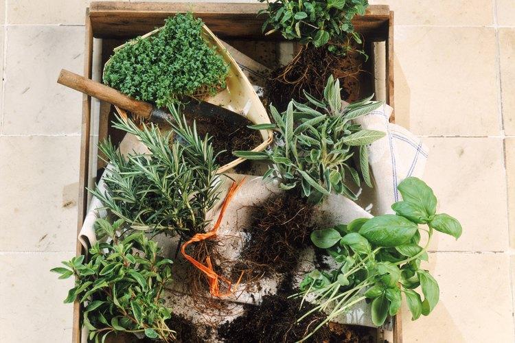 Mucha gente cultiva sus propias hierbas.