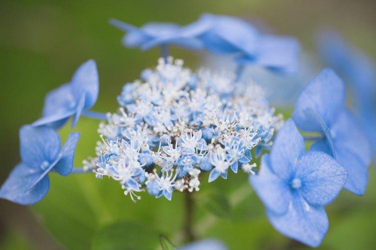 Una vez cortadas, la mayoría de las flores se benefician de una solución azucarada en su agua.