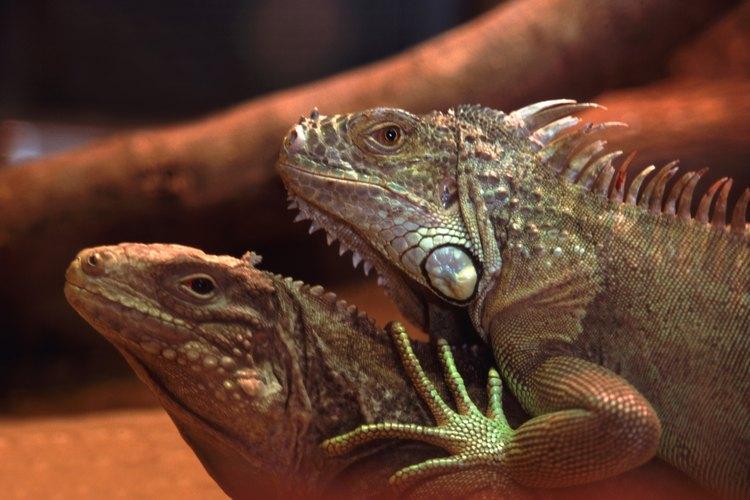 Algunos animales poseen ambos órganos sexuales.
