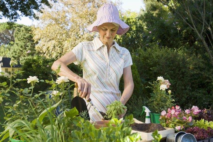 Las plantas en contenedores pueden traer el verano a los patios y terrazas.