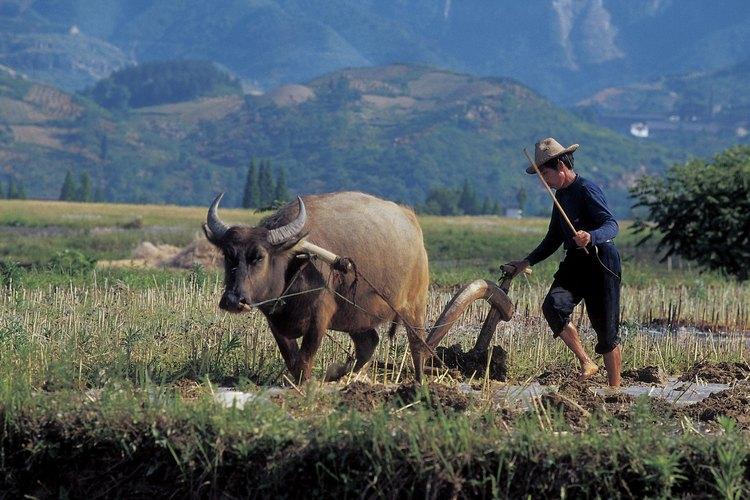 La agricultura es una de las características principales de la civilización.