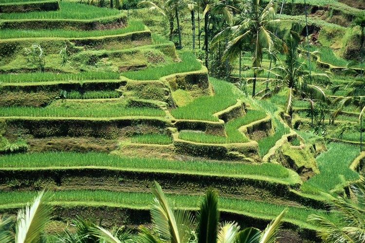 Qu es el cultivo en terrazas for Que son cultivos asociados
