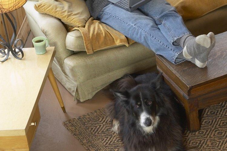 Desodoriza la orina de perro con bicarbonato de sodio.