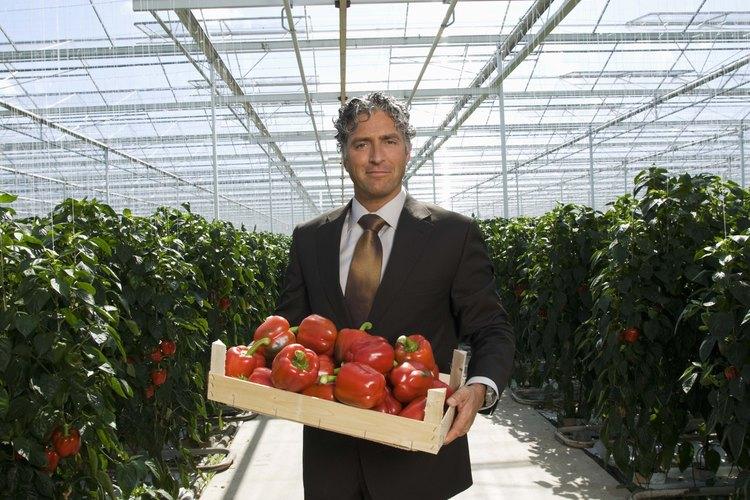 La agricultura hidropónica tiene el potencial de aumentar el tamaño de los frutos y las cosechas.