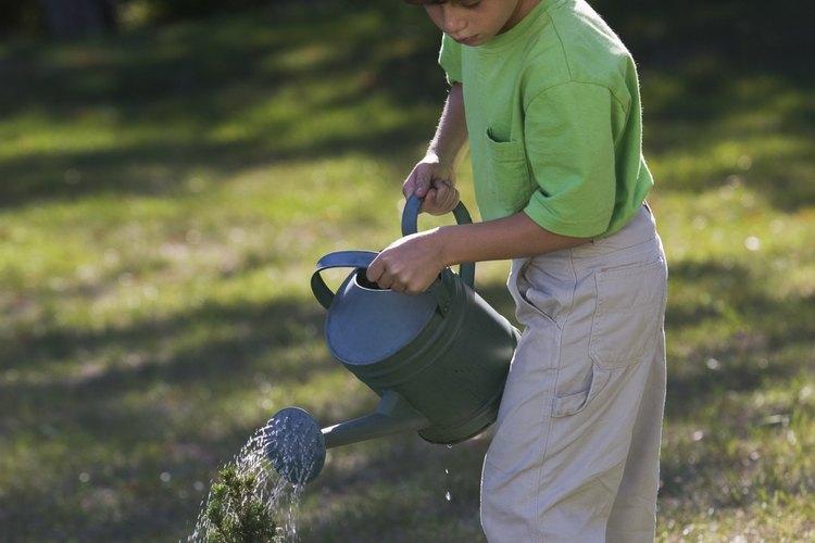 La modificación del nivel de pH de tu suelo con cal proporcionará el crecimiento óptimo de tus plantas.