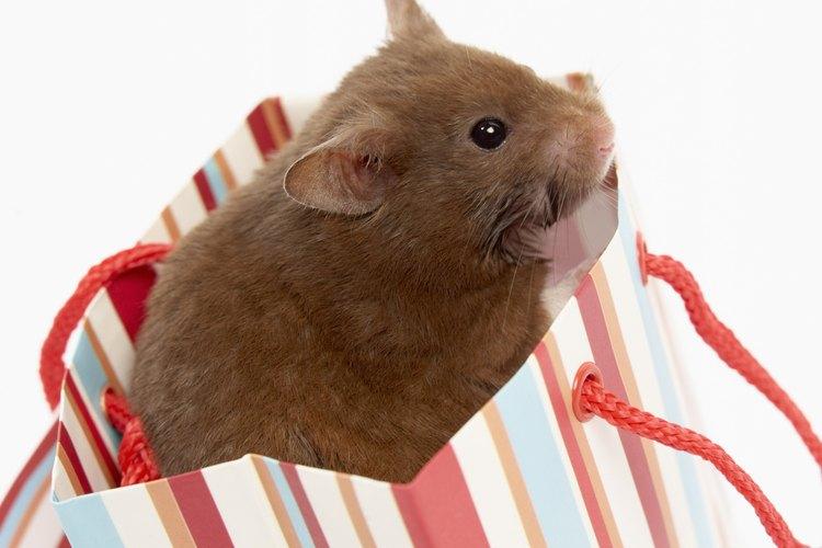 La madera de balsa y fruta están bien para los hamsters.