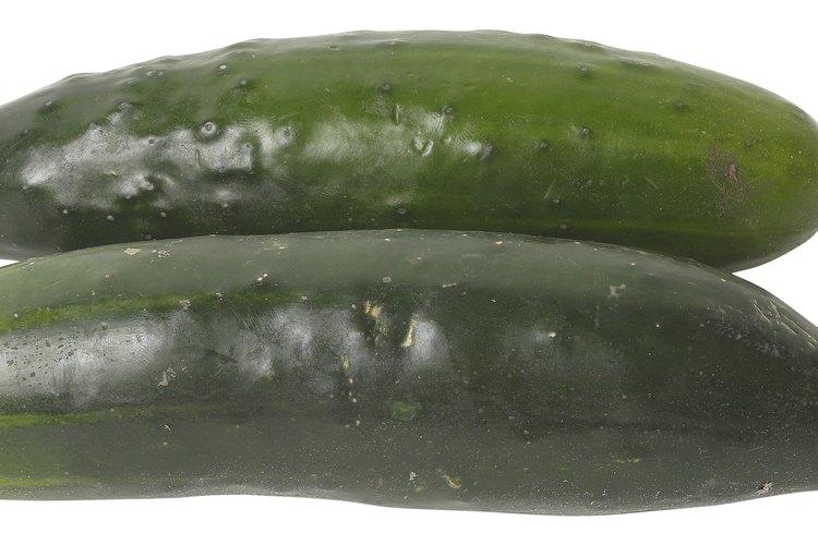 Existen muchos cultivares de pepino.